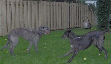 Dog Rescue Fergus Ontario